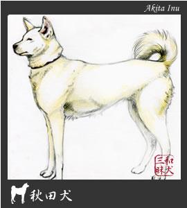 秋田犬イラスト