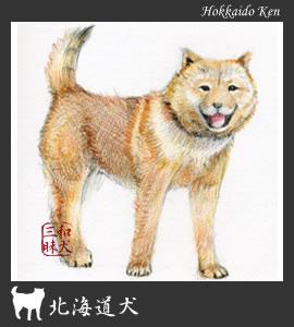 北海道犬イラスト