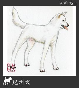紀州犬イラスト