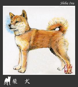 柴犬イラスト