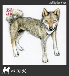 四国犬イラスト